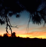 sunrise beyond the pine tree at home